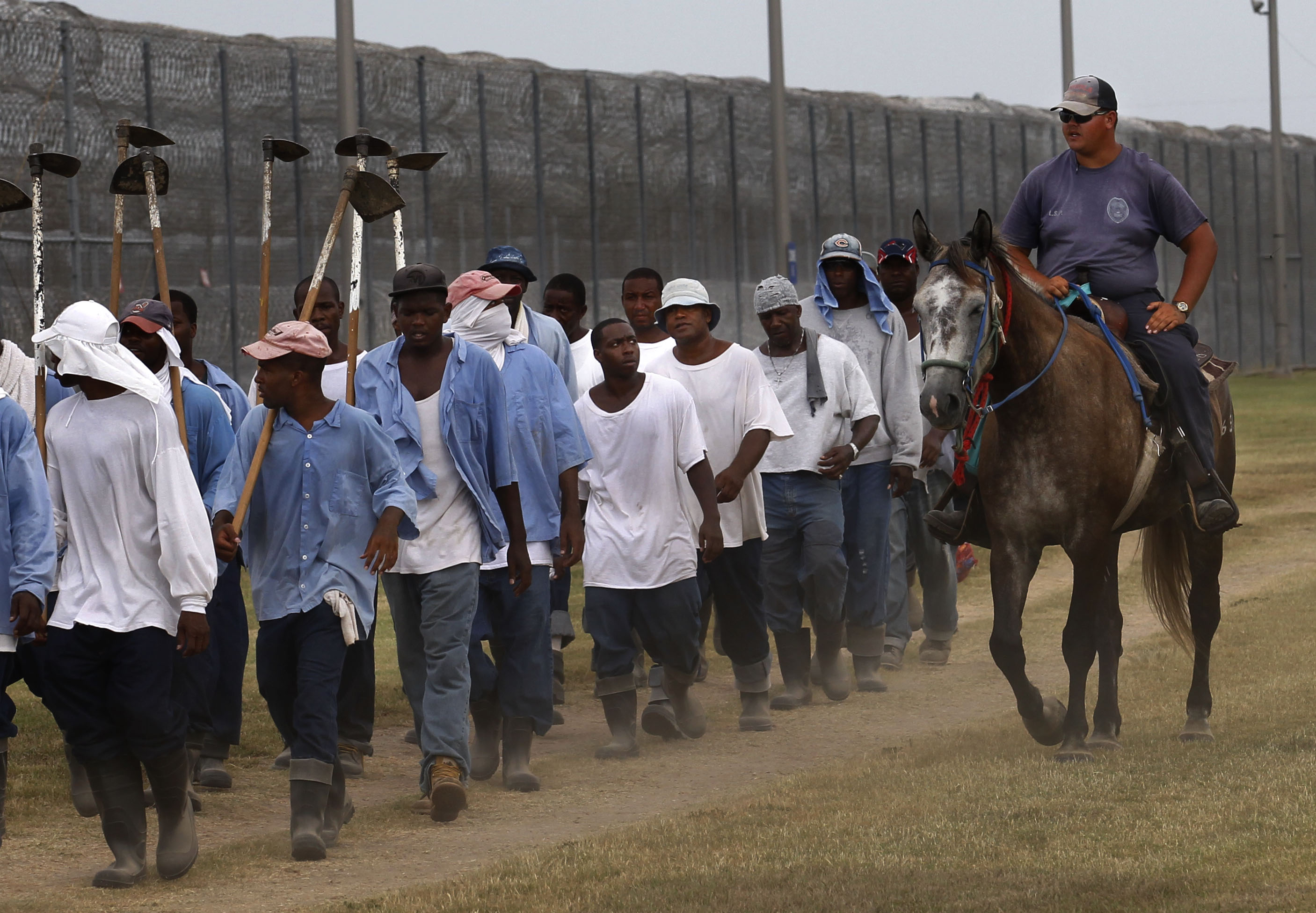In this Aug. 18, 2011 photo, prison guards ride horses that were broken by inmates as they return from farm work detail at the Louisiana State Penitentiary in Angola, La. Some prisoners spend eight hours a day training horses to work in some of the most chaotic situations police officers face: everything from controlling huge crowds to helping break up riots. They also use the animals for work at the prison farm, cultivating fields, helping to control weeds, hauling wagons and equipment. They also sell them, with their second annual horse sale scheduled for October. (AP Photo/Gerald Herbert)