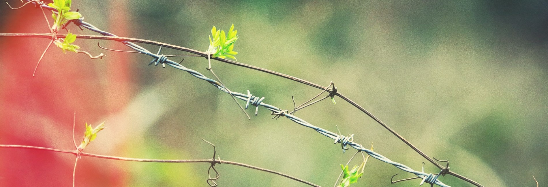 Barbed Wire with Vines