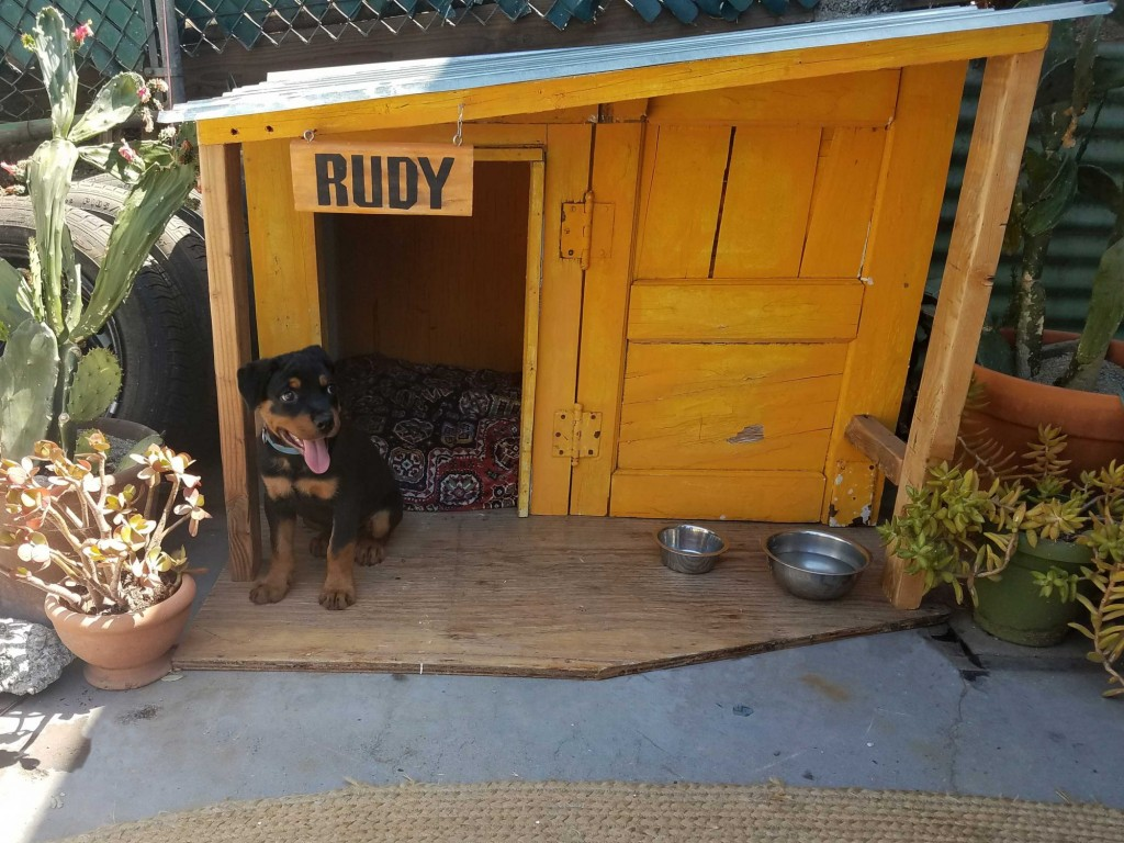 Rottweiler puppy named Rudy in his doghouse. Photo by Rachel Higgins for Oscar (CA)