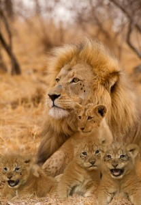 "Noni, held at a Pennsylvania prison, asked for ""a photo of a 'Adult Male Lion & Four Cubs.' It will represent: me as the father and my three sons and one daughter... because my family calls me 'The Crying Lion' and I love my kids — (my cubs) and I will protect them with my life. Please place 4 tear-drops under the right eye of the male adult lion and 1 tear-drop under each of the right eye of each cub... This is a must. Please!"" Image by: Tiffany Mcillwain"